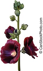 Realistic illustration of claret mallow (alcea) isolated on...