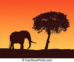 Realistic illustration with silhouette of elephant on safari in Africa. Acacia tree under orange sky with dawn, vector