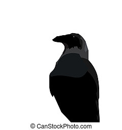 Realistic illustraton of black raven