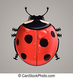 Realistic ladybug isolated on white