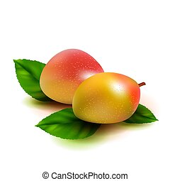 Realistic mango fruit with leaves isolated on white background. Vector illustration.