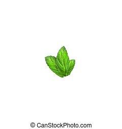 Realistic mint leaves. Menthol 3d herb green