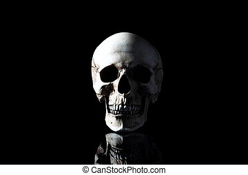 Realistic model of a human skull with teeth