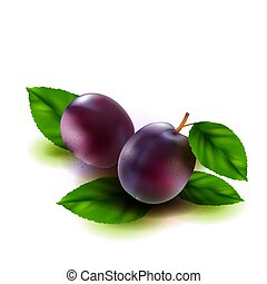 Realistic plums fruit with leaves isolated on white background. Vector illustration.