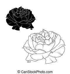 Realistic rose flower bloom black white isolated