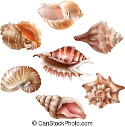 Realistic Seashell Set - Beautiful seashells of different...