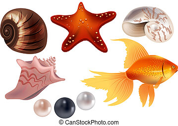 Realistic set with sea shells