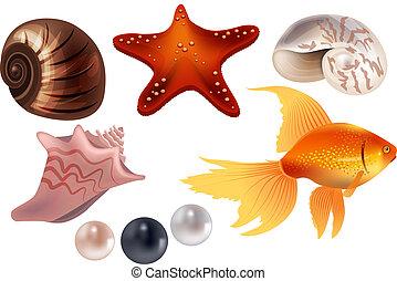Realistic set with sea shells