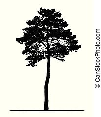 Realistic silhouette of coniferous tree, isolated on white background