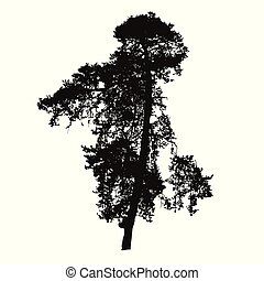 Realistic silhouette of high coniferous tree