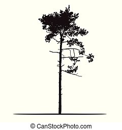 Realistic silhouette of tree - pine with branches and needle - isolated on a white background
