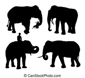 four realistic silhouettes of an asian elephant walking, eating, standing, with the rider