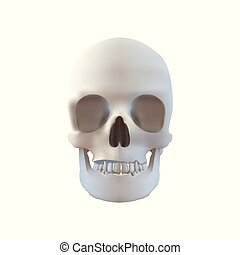 Realistic Skull Illustration - Isolated on White