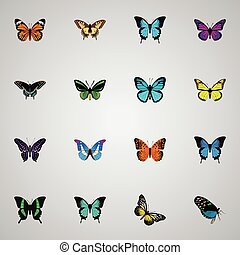 Realistic Sky Animal, Tropical Moth, Danaus Plexippus And Other Vector Elements. Set Of Butterfly Realistic Symbols Also Includes Orange, Monarch, Morpho Objects.