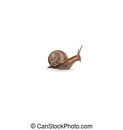 Realistic snail isolated on white background - vector