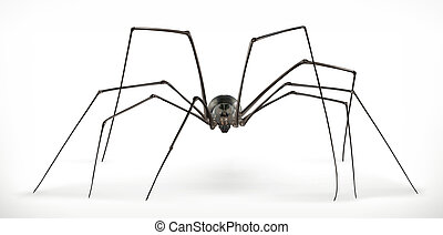 Realistic spider, halloween. 3d vector icon