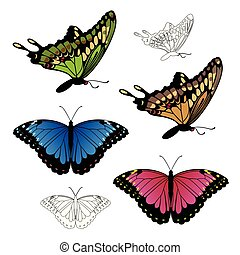 Realistic Swallowtail and Morpho butterfly illustration