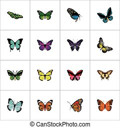 Realistic Tiger Swallowtail, Copper, Archippus And Other Vector Elements. Set Of Moth Realistic Symbols Also Includes Monarch, Sky, Malachite Objects.