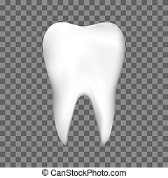 Realistic Tooth for dentist or stomatology dental care design template.