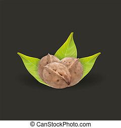 Realistic tree walnut and walnut leaf, vector