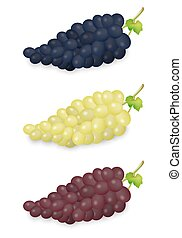 Realistic vector blue, green and red grapes bunch set isolated on white background. Design template in EPS10.
