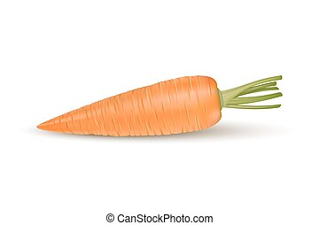 Realistic vector carrot icon isolated on white background. Design template.