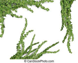realistic vector ivy set