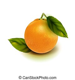 Realistic vector orange fruit isolate. Orange with leaves isolated on white.