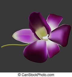 Realistic vector orchid.