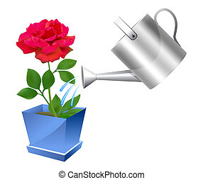Realistic watering can with rose illustration on white...