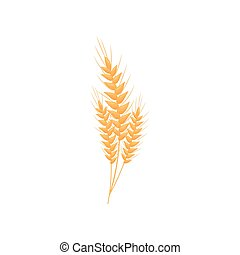 Realistic wheat ears. Vector illustration on white background.