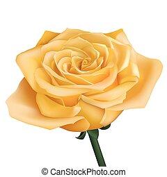 Realistic yellow rose