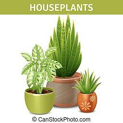 realistico, composizione, houseplants