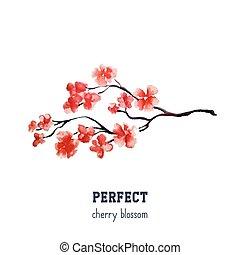 realistico, fiore, albero, -, giapponese, isolato, fondo., sakura, ciliegia, bianco rosso
