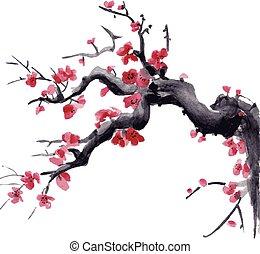 realistico, fiore, isolato, acquarello, fondo., sakura, bianco