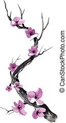 realistico, fiore, isolato, fondo., sakura, bianco
