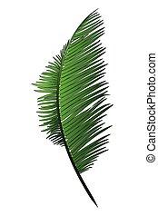 realistico, verde, ramo, di, tropicale, palma noce cocco