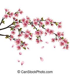 realistisch, blossom , kers, vliegen, -, japanner, boompje, vrijstaand, kroonbladen, sakura, achtergrond, witte