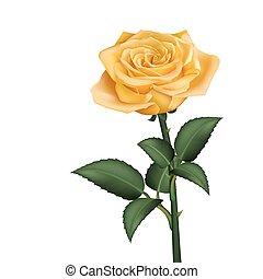 realistisch, gele roos
