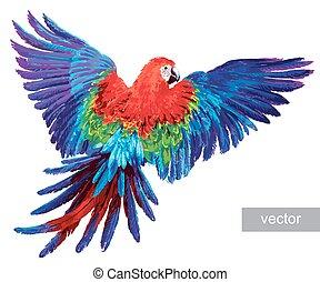 realistisch, macaw, bunte, papageien