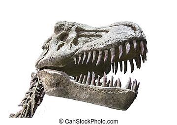 realistisch, modell, von, tyrannosaurus rex, dinosaurierer