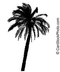 realistisch, palm, silhouette, bomen, illustratie