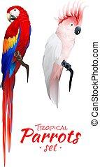 realistisch, papageien, tropische , satz