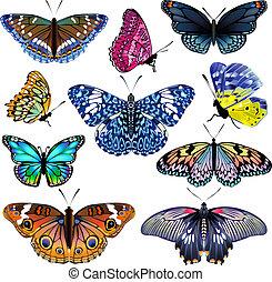 realistisch, set, vrijstaand, kleurrijke, butterflies.