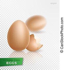 realistisch, vector, egg.