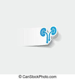 realistisk, element:, design, njurarna, medicinsk