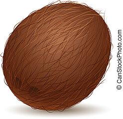 realistisk, kokosnöt