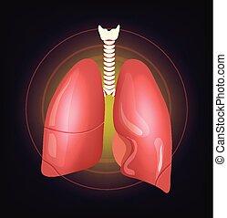 realistisk, vektor, lungan, illustration