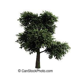 realistisk, vektor, träd, isolerat