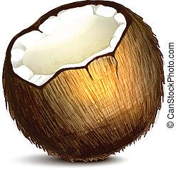 realistyczny, orzech kokosowy